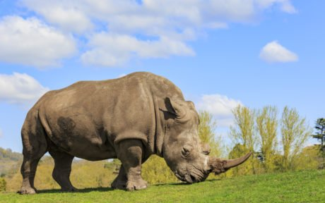EIC Case Study – West Midlands Safari Park