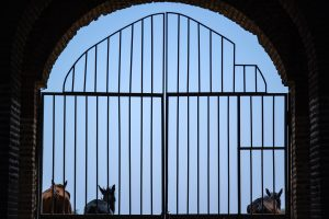 looking through a gate and seeing horses
